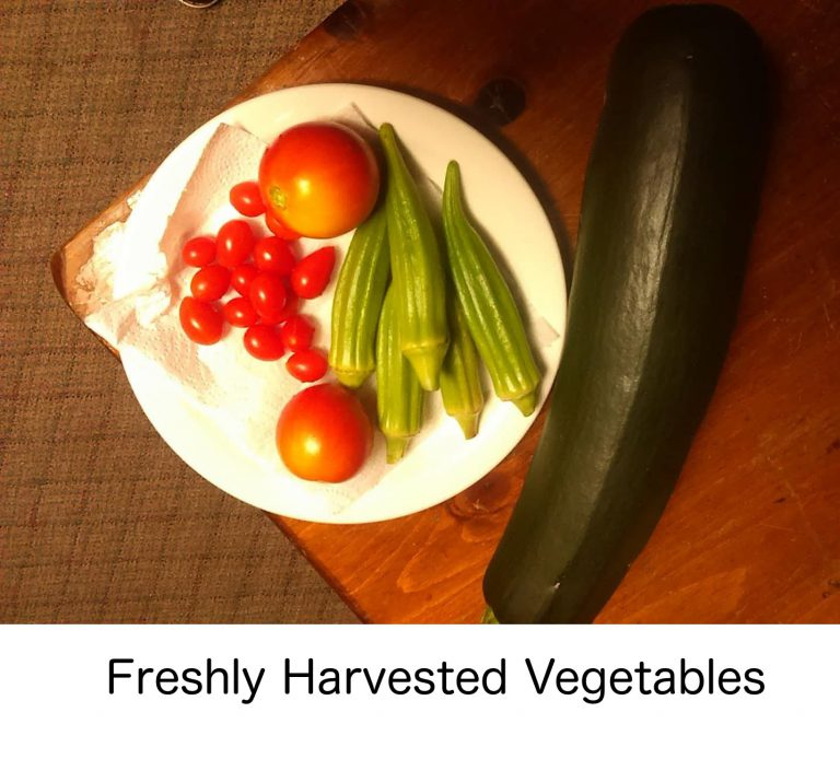 selectyourlandscaping-freshlyharvested-with-caption